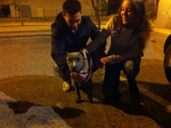 Tara perro adoptado bamb difunde - Perrera de vilafranca ...